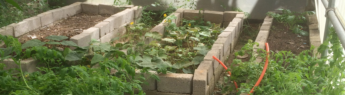 03-homepage-slider-vegetable-seeds